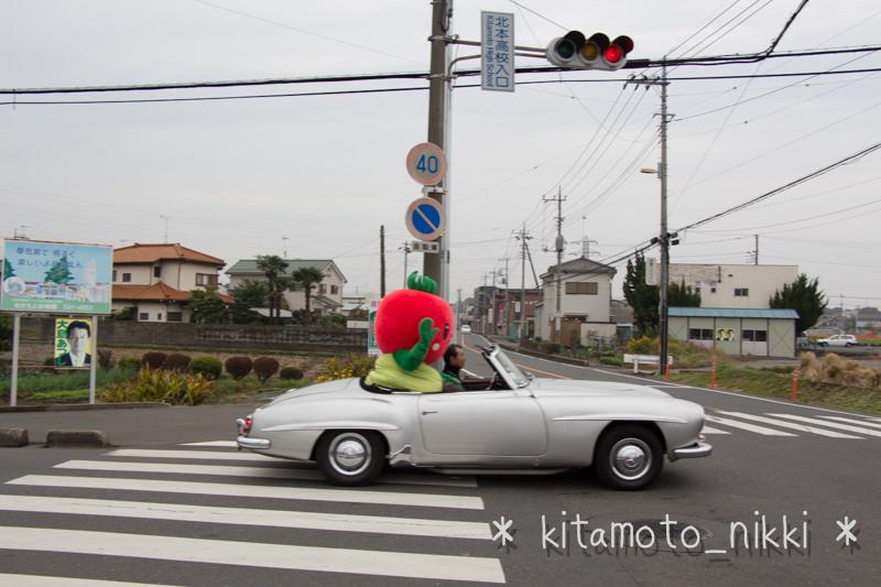 IMG_7855-kiku-matsuri-2