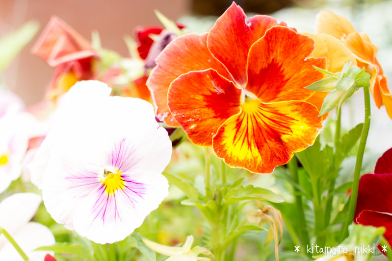 IMG_9900-open-garden