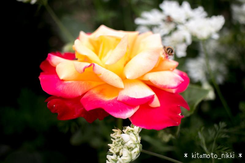 IMG_9912-open-garden