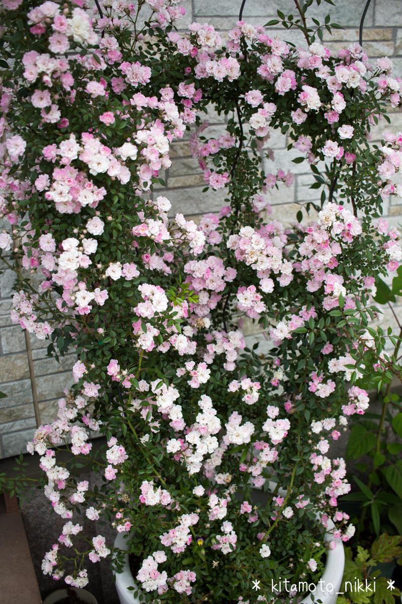 IMG_9913-open-garden