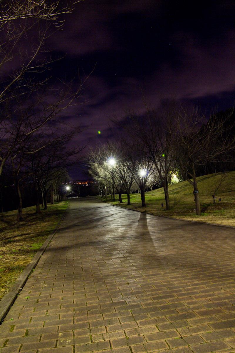 IMG_6799-takao-sakura-park-yakei