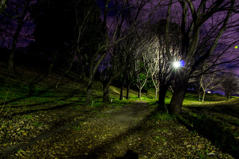 IMG_6860-takao-sakura-park-yakei