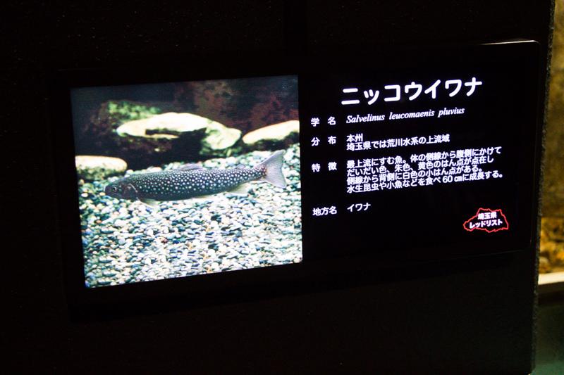 IMG_1388-saitama-suizokukan