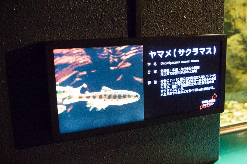 IMG_1399-saitama-suizokukan