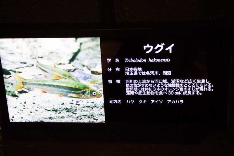 IMG_1474-saitama-suizokukan