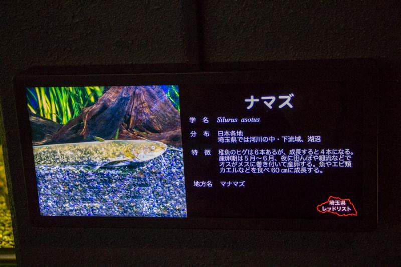 IMG_1543-saitama-suizokukan