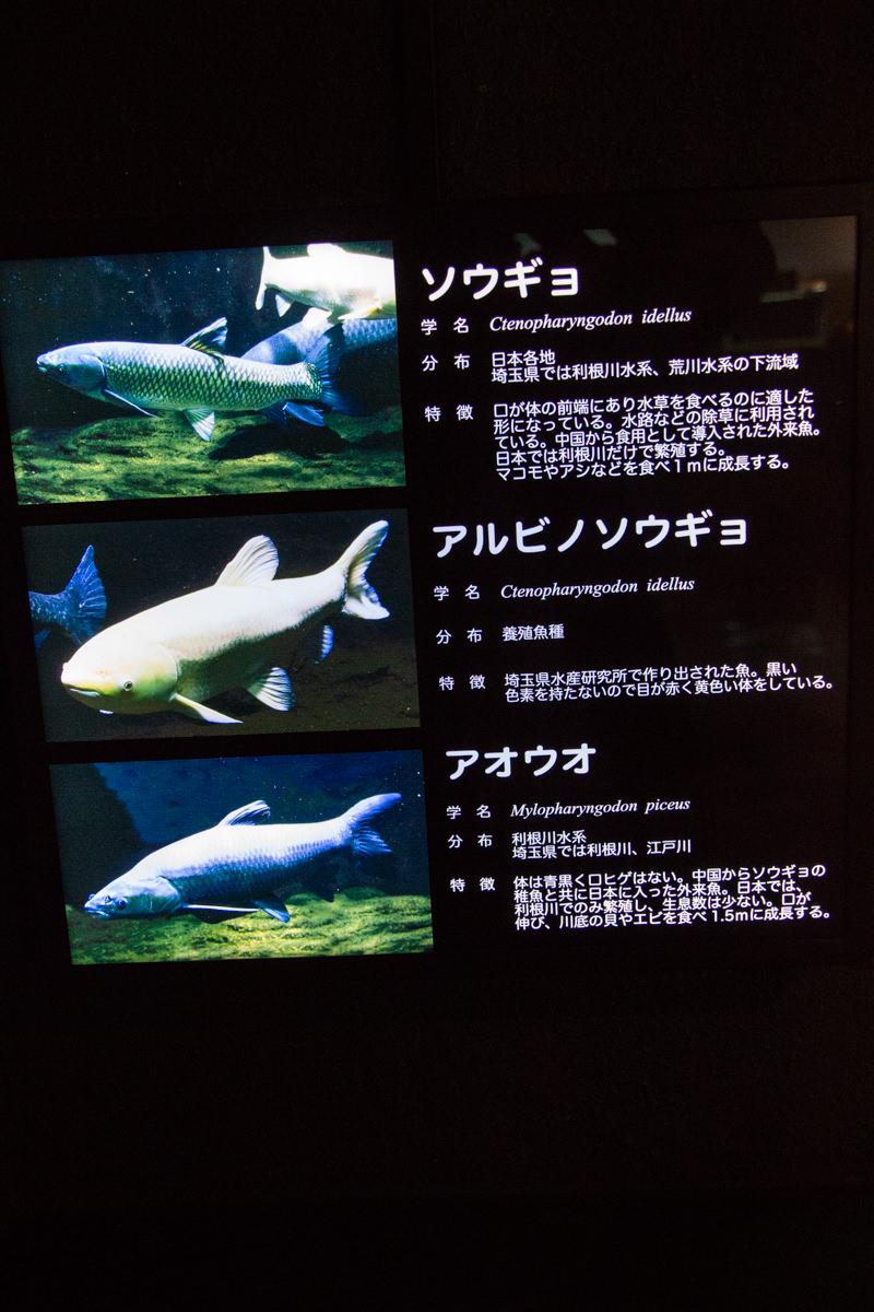 IMG_1548-saitama-suizokukan