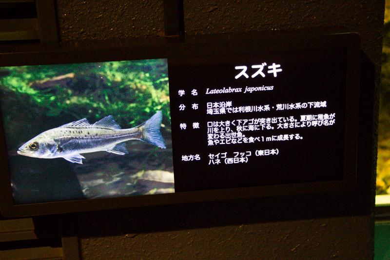 IMG_1583-saitama-suizokukan