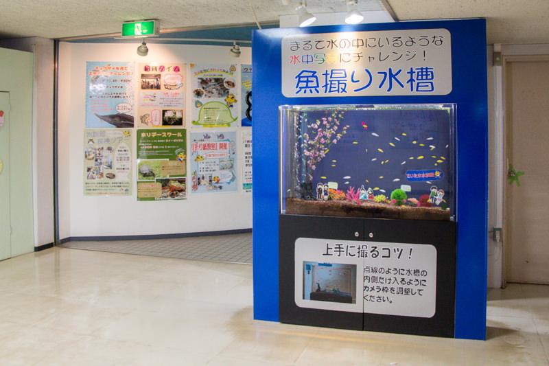 IMG_1670-saitama-suizokukan