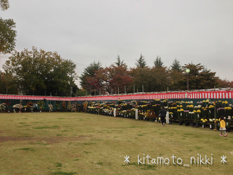 IMG_5305-kiku-matsuri