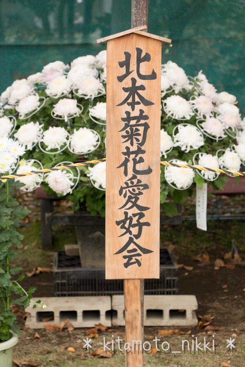 IMG_7615-kiku-matsuri
