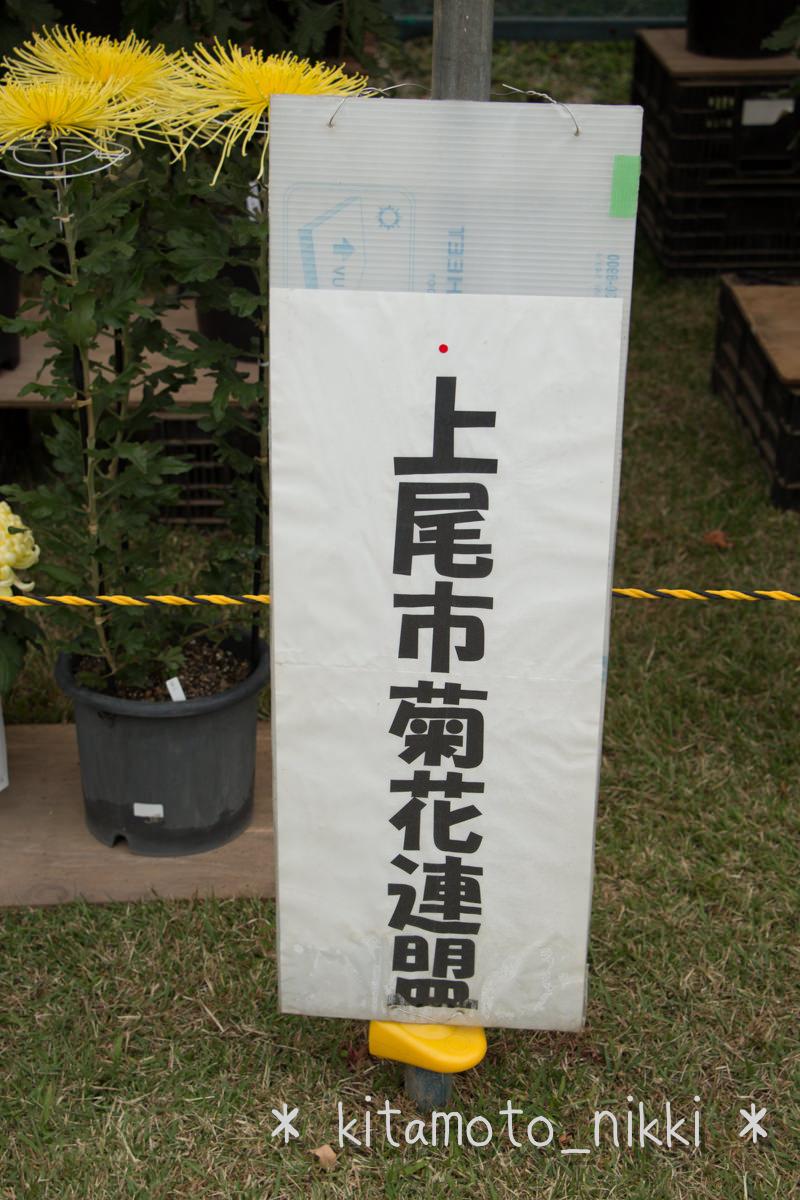 IMG_7620-kiku-matsuri