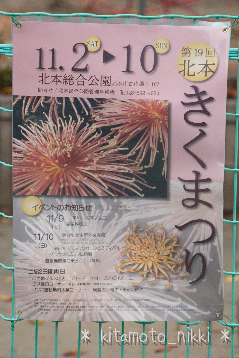 IMG_7717-kiku-matsuri