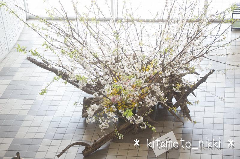 IMG_3991-sakura-summit-2014