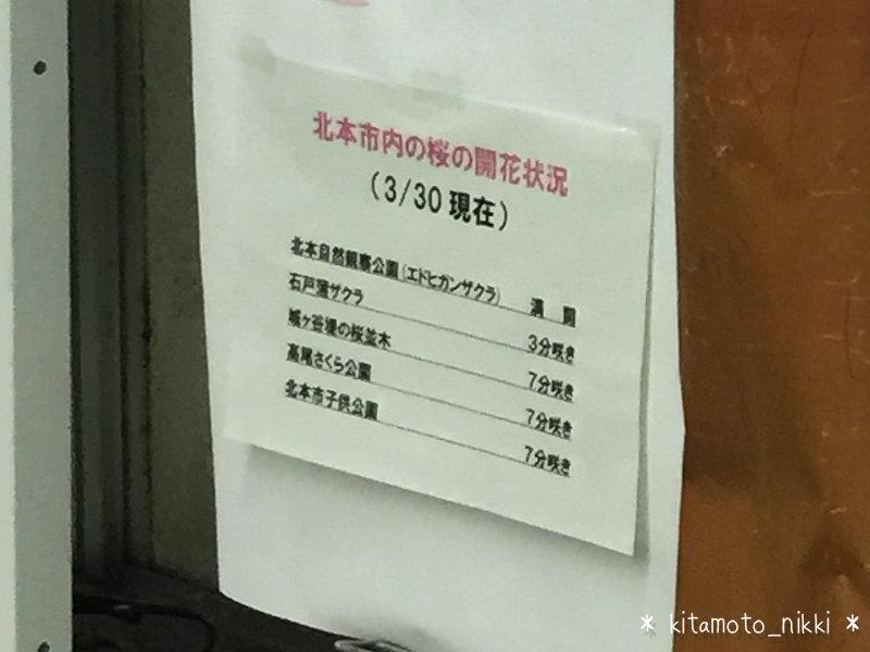 IMG_4053-kitamoto-station-sakura-sakaseyo-2