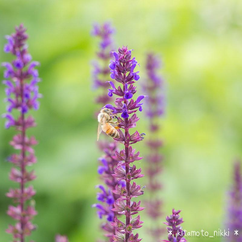 IMG_9839-open-garden