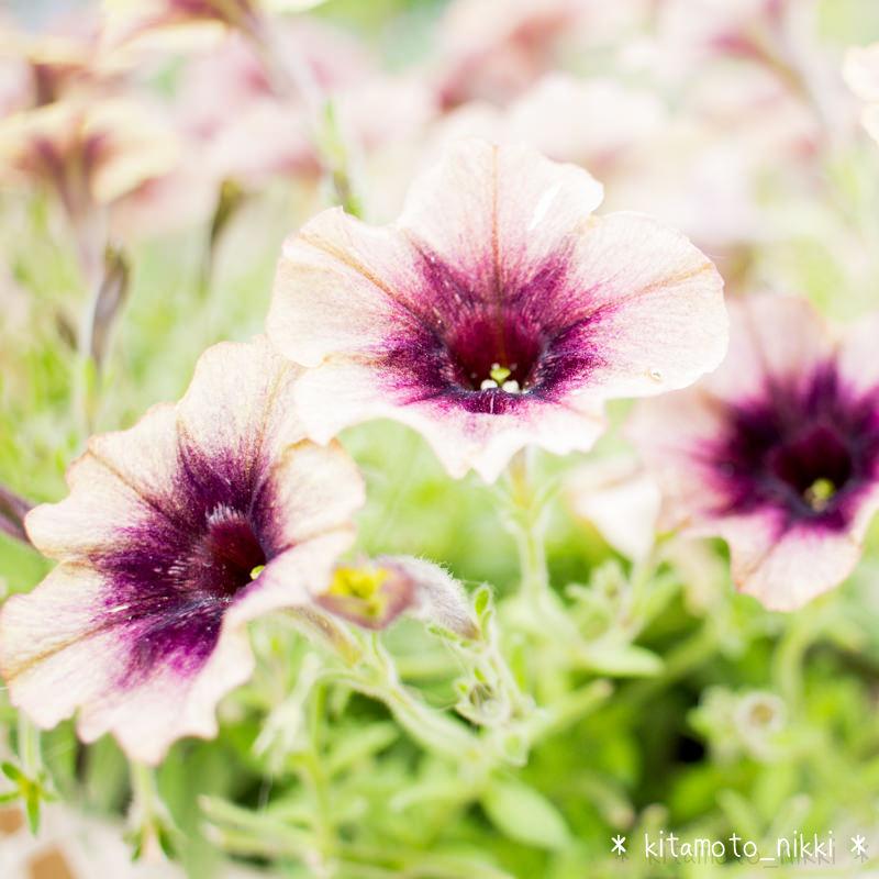 IMG_9892-open-garden