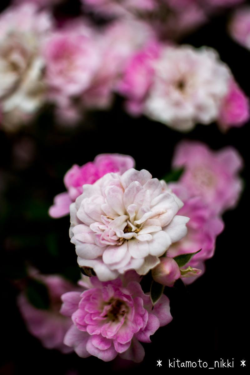IMG_9915-open-garden