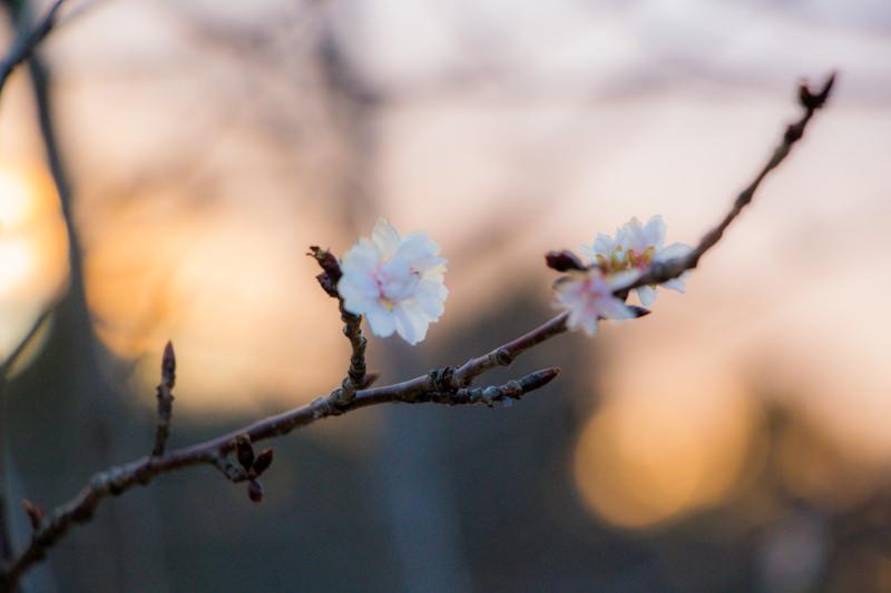 IMG_6554-takao-sakura-park