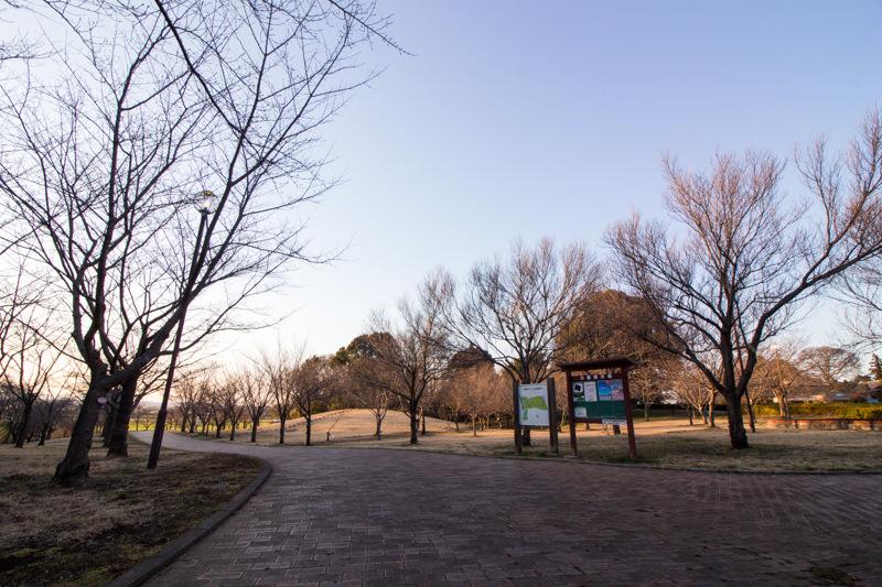 IMG_1162-taokaosakura-park-kawazuzakura