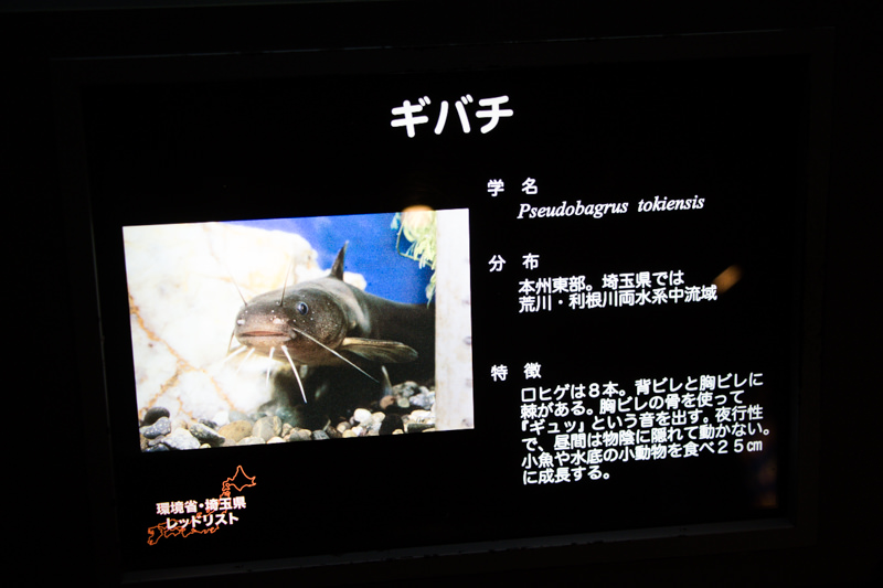 IMG_1492-saitama-suizokukan