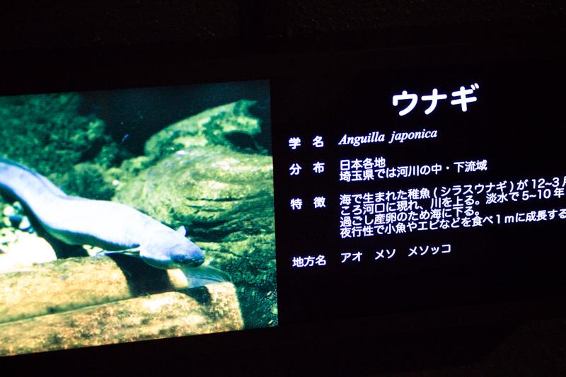 IMG_1595-saitama-suizokukan