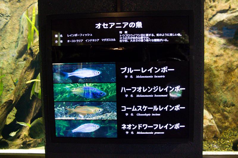 IMG_1610-saitama-suizokukan